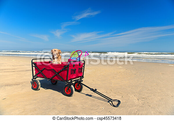 Funny dog on vacation - csp45573418