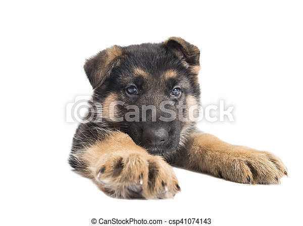 funny dog - csp41074143
