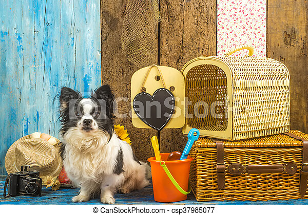 Funny dog with summer holiday luggage - csp37985077