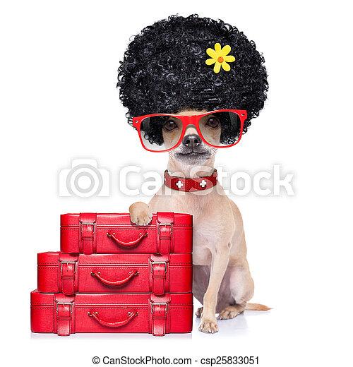 Funny Dumb Vacation Dog