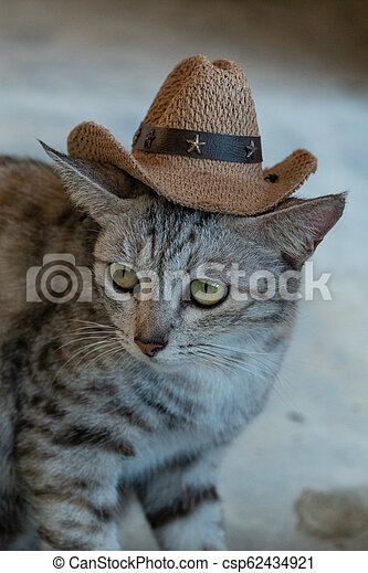 6c6581719 Funny gray cat with hat