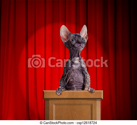 Funny hairless cat standing on a rostrum for a speech with red curtains and light spot behind - csp12618724