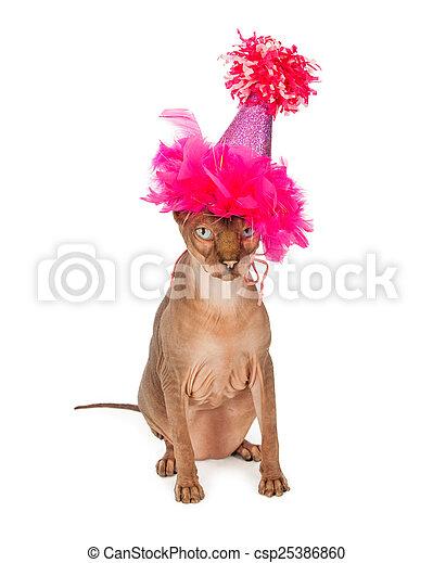 Funny Hairless Cat Wearing Birthday Hat