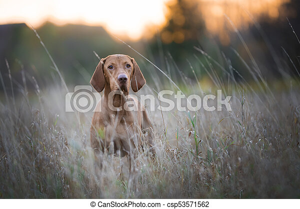 funny hunter dog in autumn - csp53571562