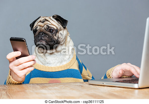 Funny man with pug dog head using laptop and smartphone - csp36111125