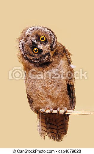 Funny owl - csp4079828
