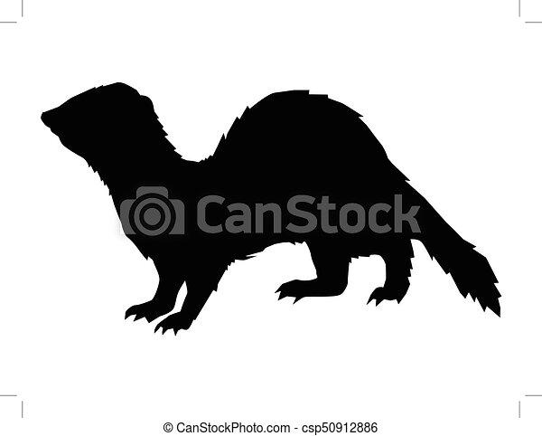 funny, playful ferret - csp50912886