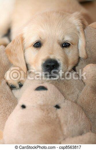 Funny small dog - csp8563817