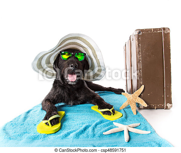 Funny summer black dog with summer accessories. - csp48591751