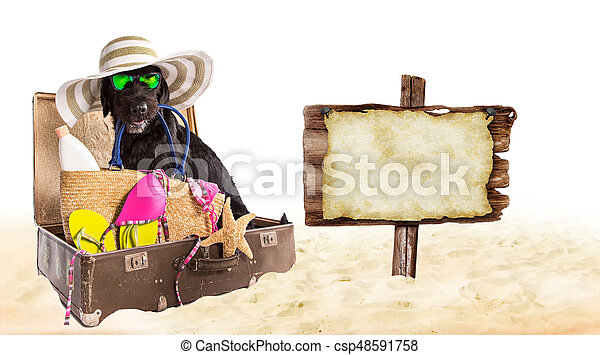 Funny summer black dog with summer accessories. - csp48591758