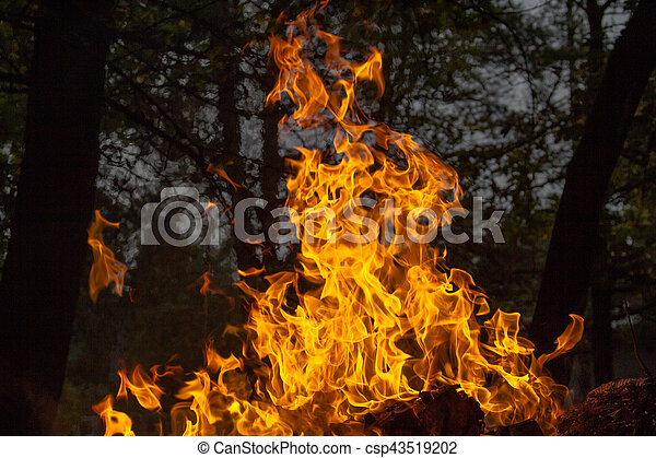 fuoco, fiamma - csp43519202