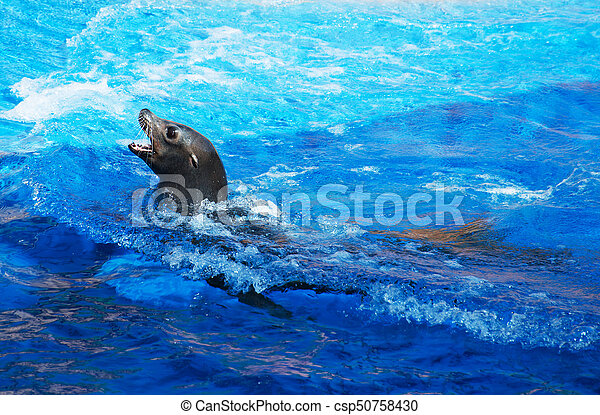 Fur seal swimming in national park. Swimming Seal on seal clip art, seal in the sea, seal animals, seal on land,