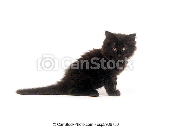 Fuzzy black kitten - csp5906750