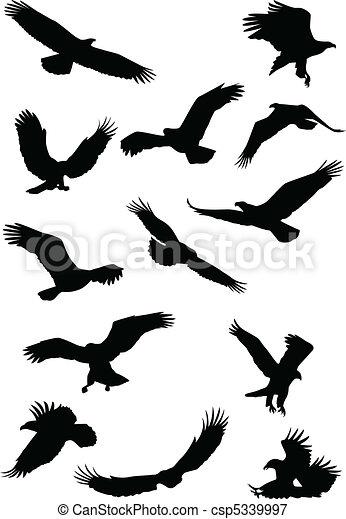 fying, orel silhouette, ptáček - csp5339997