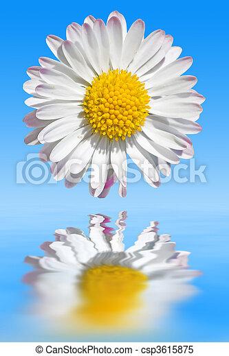 gänseblumen - csp3615875