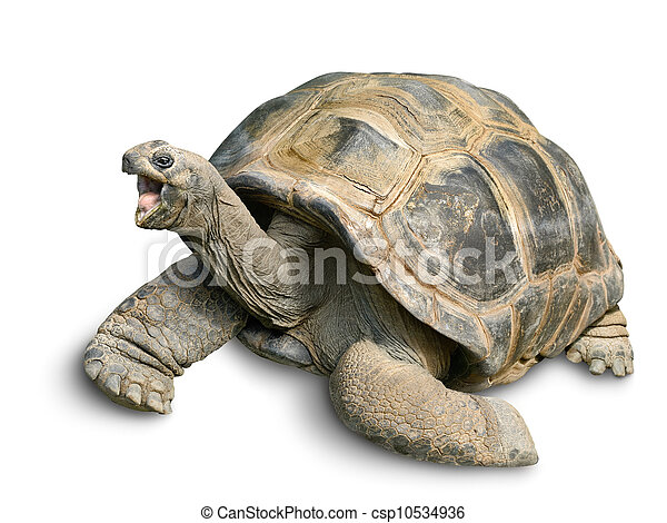 G ant heureux blanc tortue beau rigolote tortue - Image tortue rigolote ...