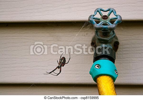 gömb takács, fekete, pók, sárga - csp8159995