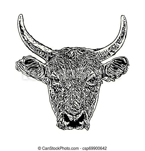 głowa, byk - csp69900642