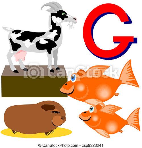 g goat, goldfish, guinea pig . illustration of animals the