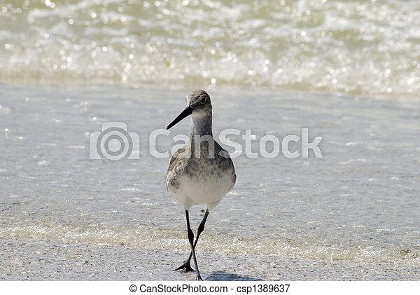 gaivota, praia - csp1389637