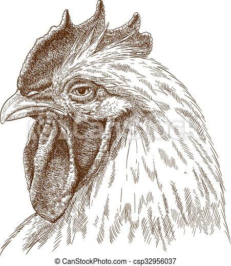 Ilustración de gallo - csp32956037