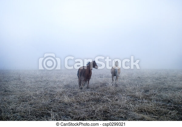 Gallping in the Mist - csp0299321