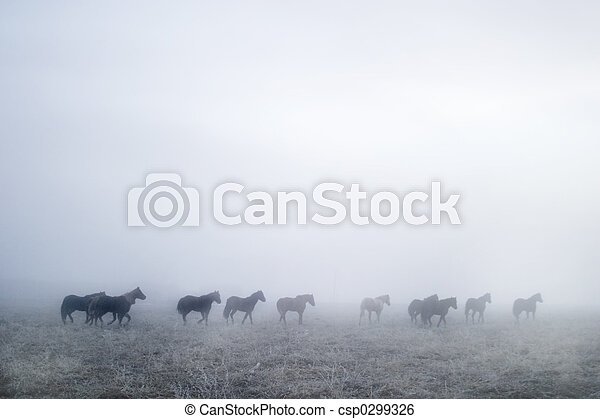 Gallping in the Mist - csp0299326