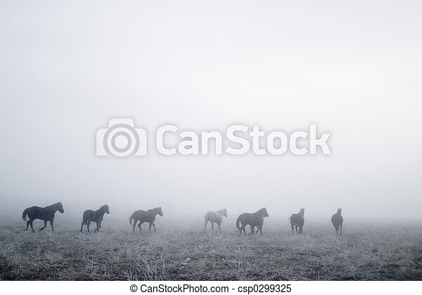 Gallping in the Mist - csp0299325