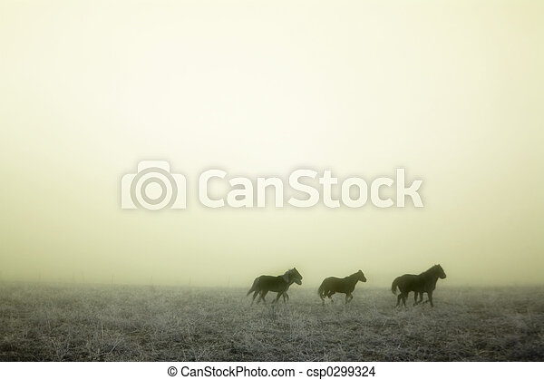 Gallping in the Mist - csp0299324