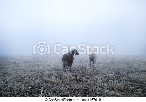 Gallping in the Mist - csp1467919
