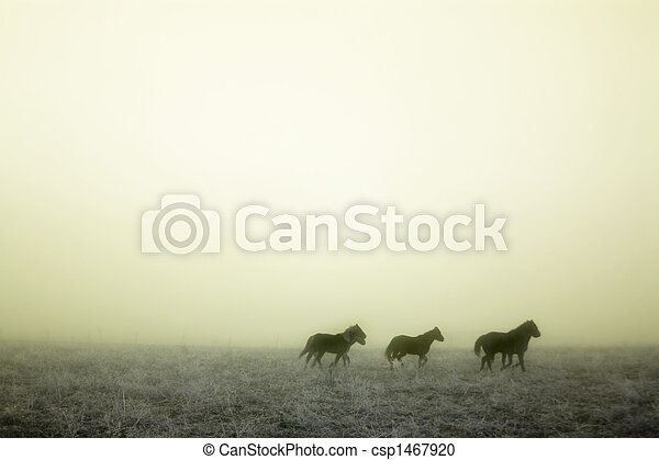 Gallping in the Mist - csp1467920