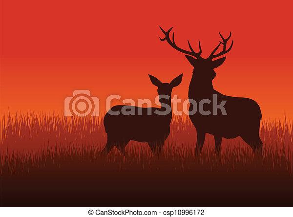 Deer y doe - csp10996172