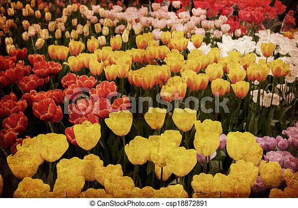 gammal, blomma, grunge - csp18872891