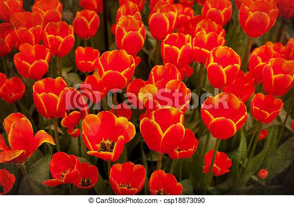 gammal, blomma, grunge - csp18873090