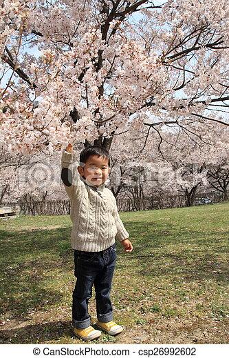 garçon, cerise, japonaise, années, fleurs, (3, old) - csp26992602