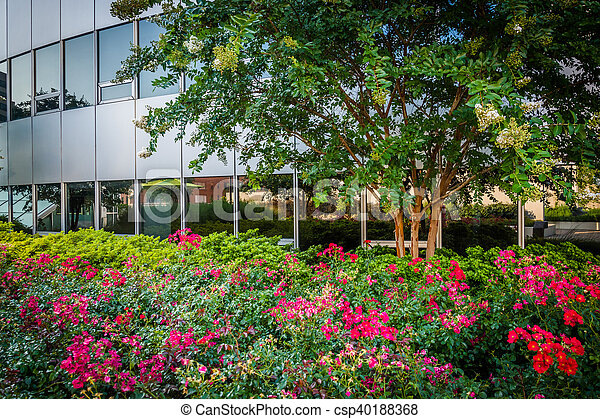 Garden at freedom park and modern building in rosslyn, arlington ...