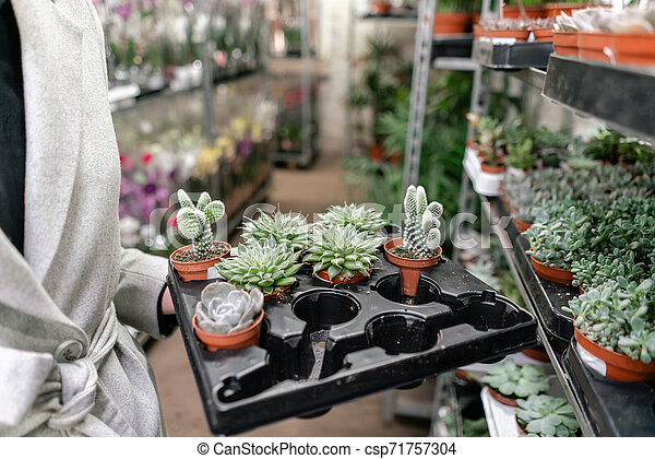 Garden center and wholesale supplier concept. Woman holding a box with plants in her hands. Buying plants for home. - csp71757304