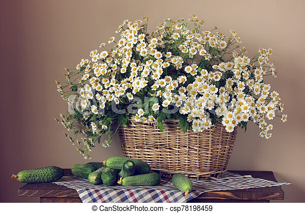 Garden daisies in a basket and fresh cucumbers. - csp78198459