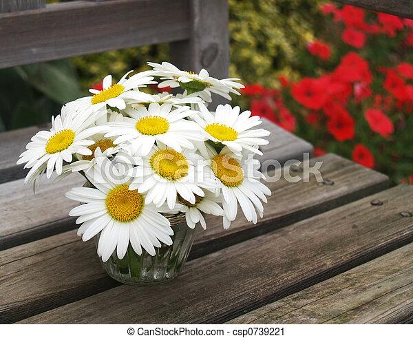 garden daisies - csp0739221