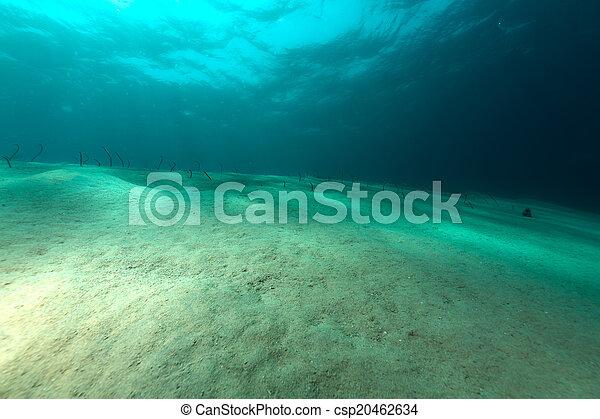 Garden eels in the red sea. Garden eels in the red sea.
