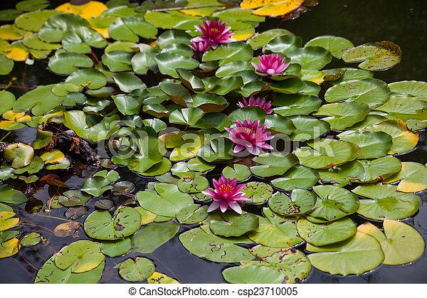 Garden fish pond with water lily, gardening design. on japanese zen garden, design your garden, flower garden, designing an office,