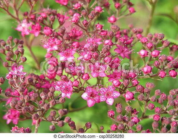 garden flowers - csp30258280