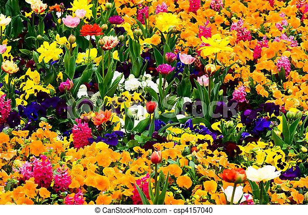 Garden full of flowers - csp4157040