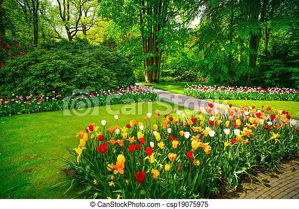 Garden in Keukenhof, tulip flowers and trees. Netherlands - csp19075975