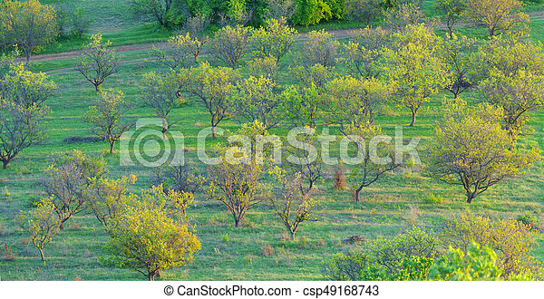 garden in the mountains at sunrise - csp49168743