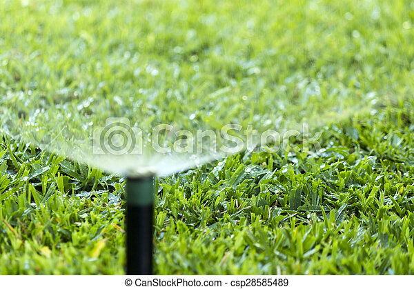 garden irrigation system. garden irrigation system spray watering lawn. - csp28585489