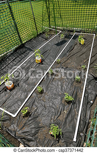 Garden Irrigation System A Small Miniature Garden Has A Series Of