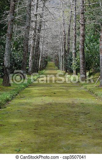 garden path - csp3507041