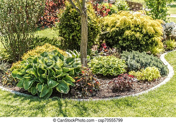 Garden Plants Island - csp70555799