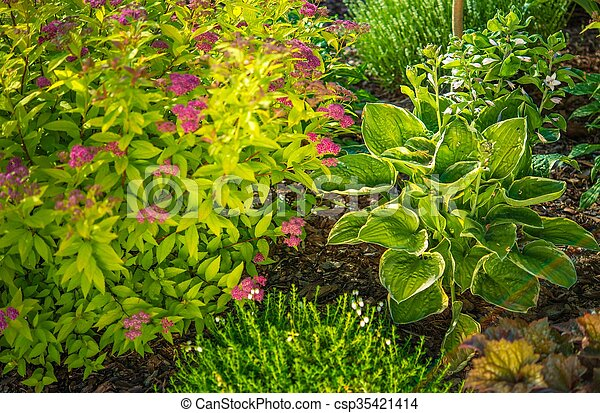 Garden Plants - csp35421414